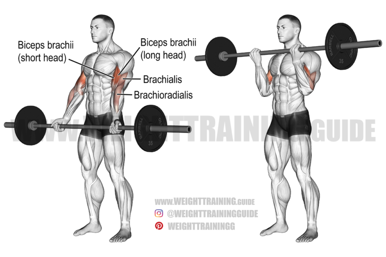 Barbell curl