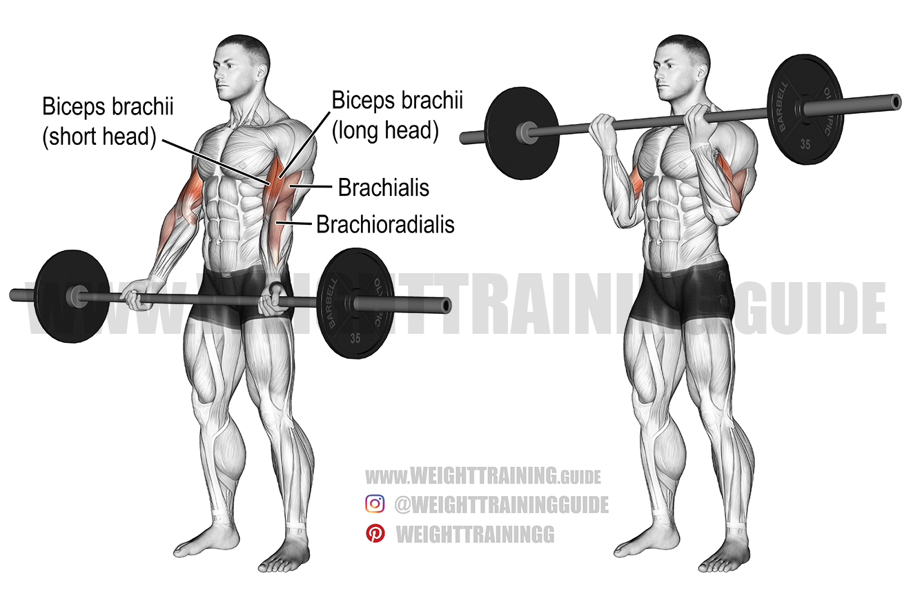 Barbell curl exercise