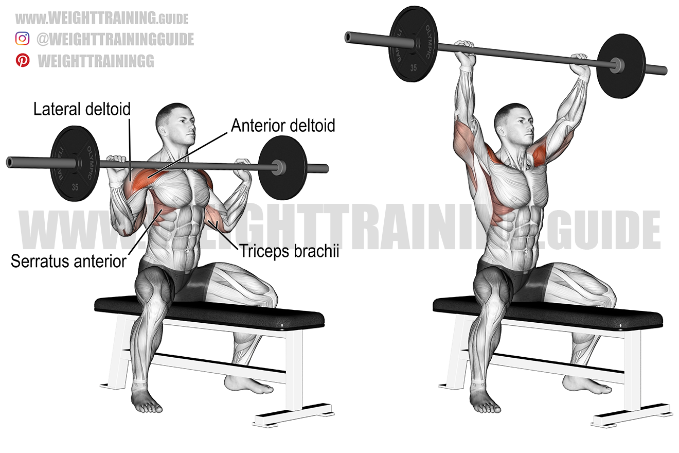 Seated barbell shoulder press exercise