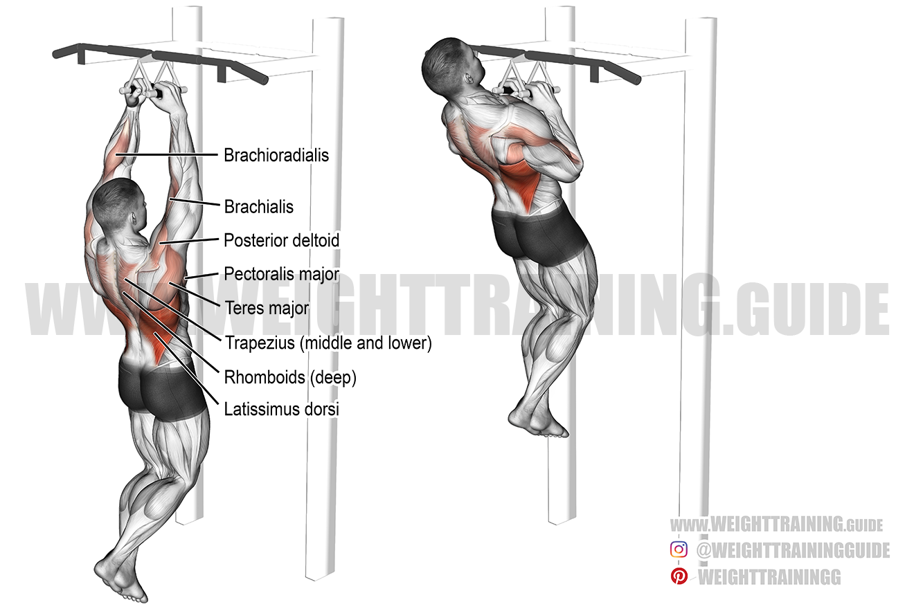 Close neutral grip pull-up exercise