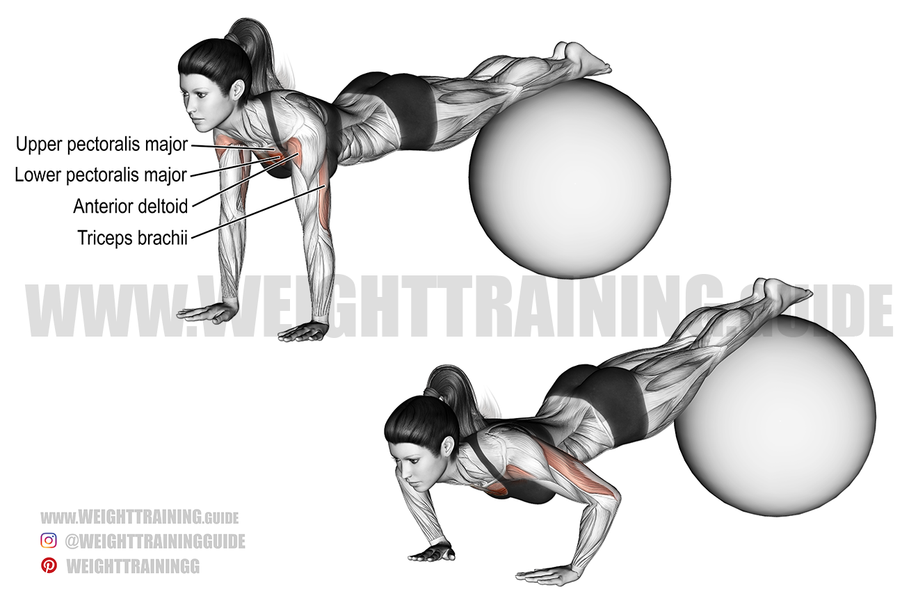 Stability ball decline push-up exercise