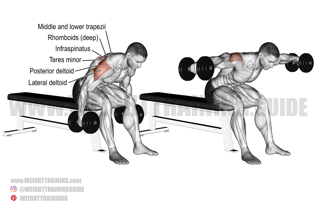Seated reverse dumbbell fly exercise