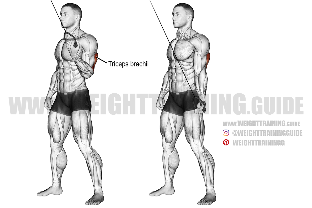 Cable one-arm reverse-grip triceps push-down exercise
