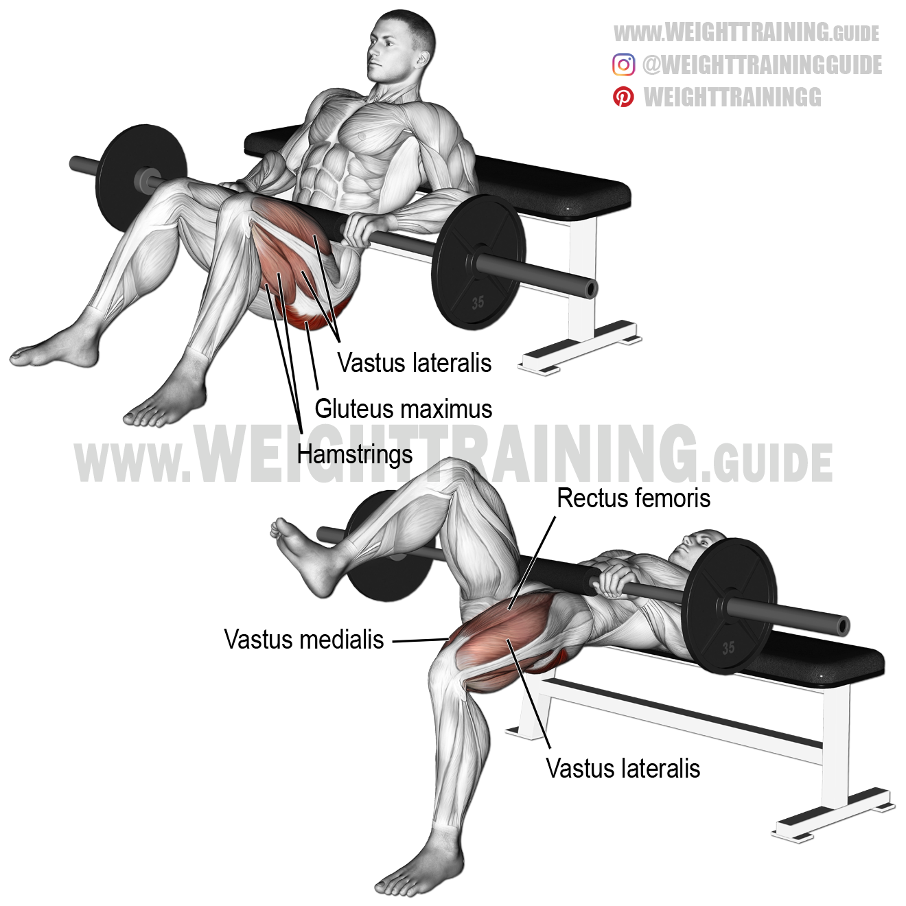 Barbell One Leg Hip Thrust Exercise Instructions And Video