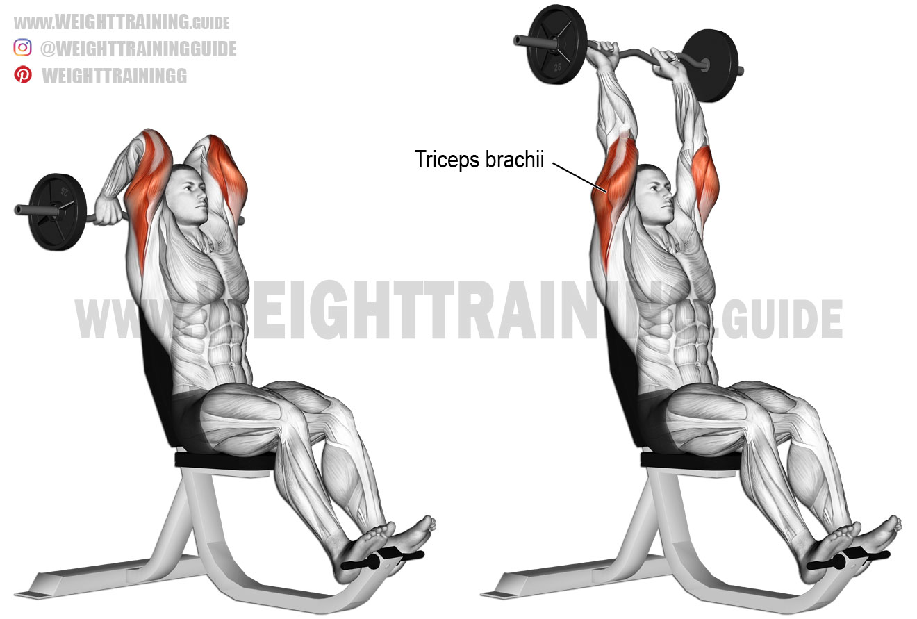 Seated overhead EZ bar triceps extension exercise