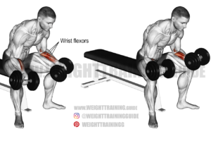 Seated dumbbell wrist curl exercise