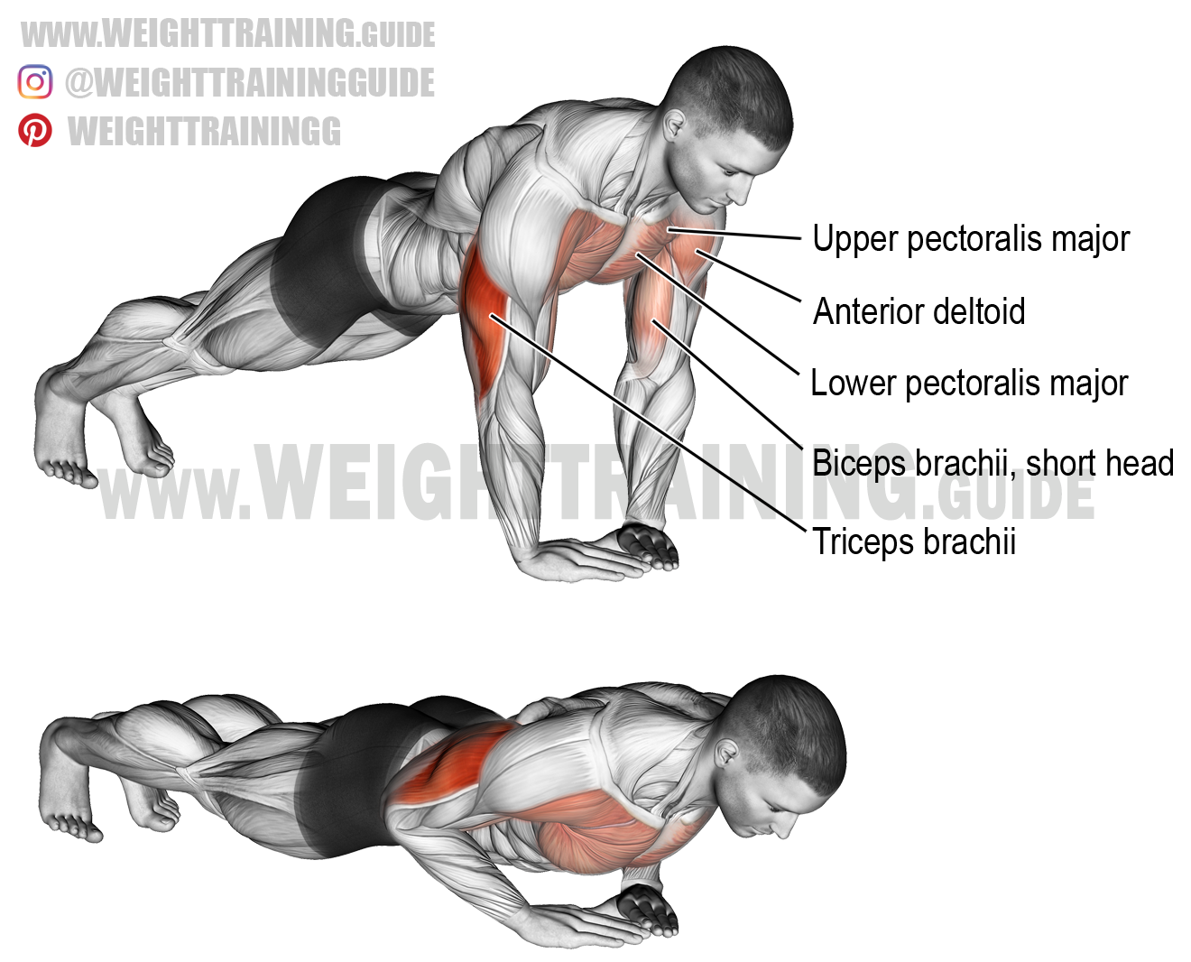 Diamond Push Up Exercise Instructions And Video Weight