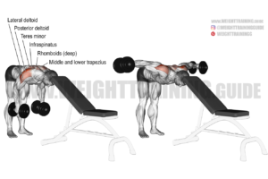 Head-supported reverse dumbbell fly exercise