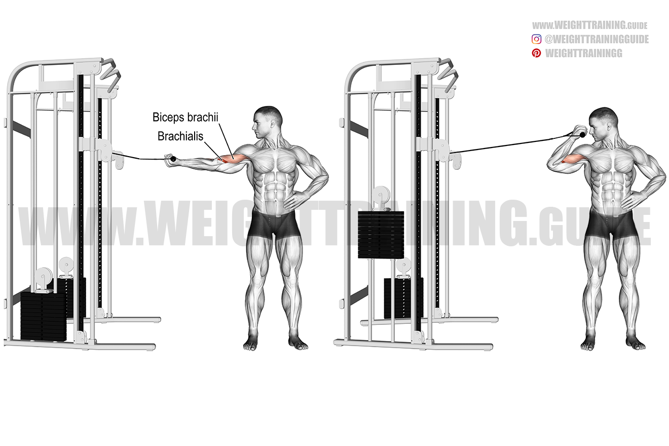 Cable overhead biceps curl exercise