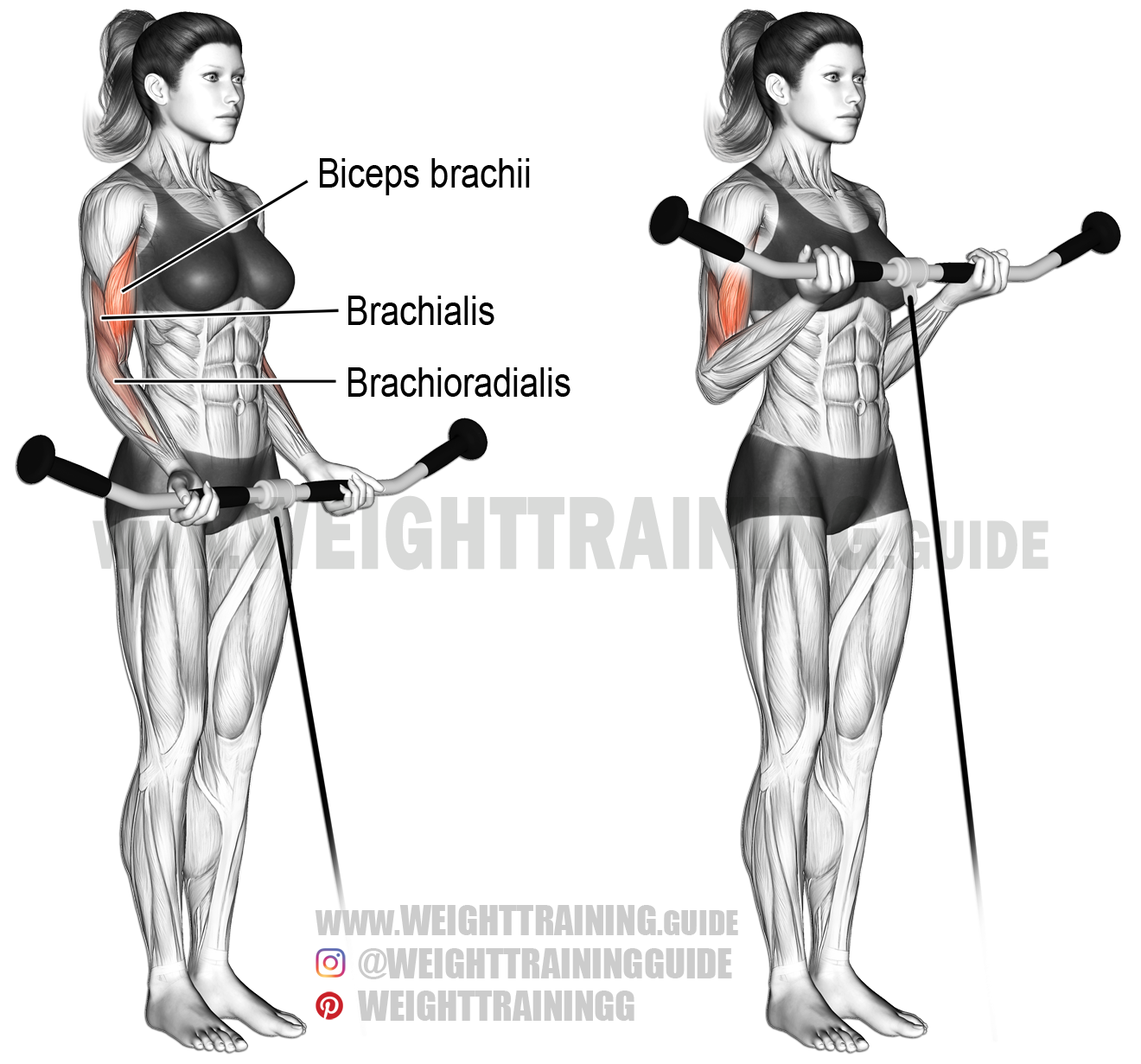 cable curl exercise instructions and video weight