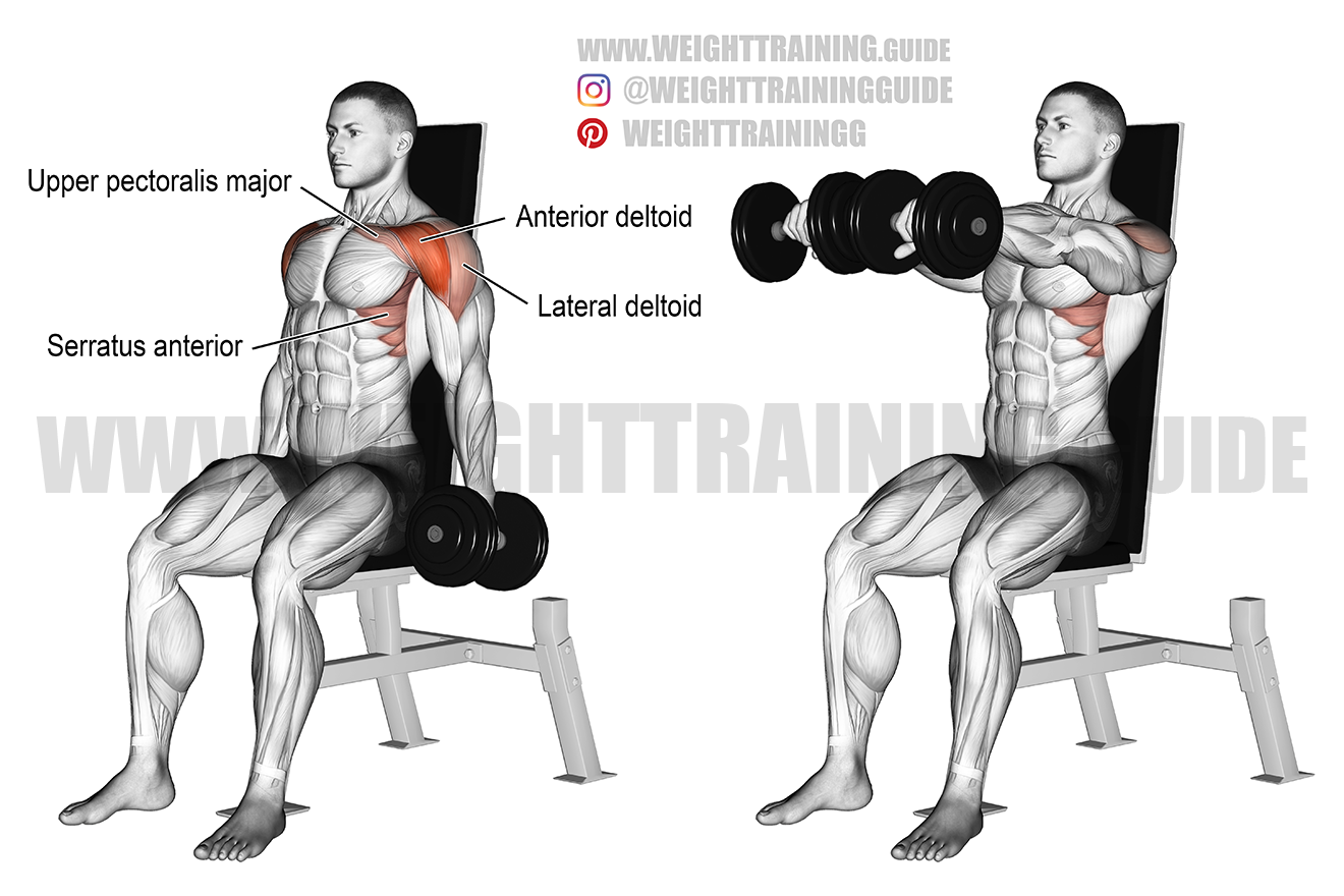 Seated dumbbell front raise exercise