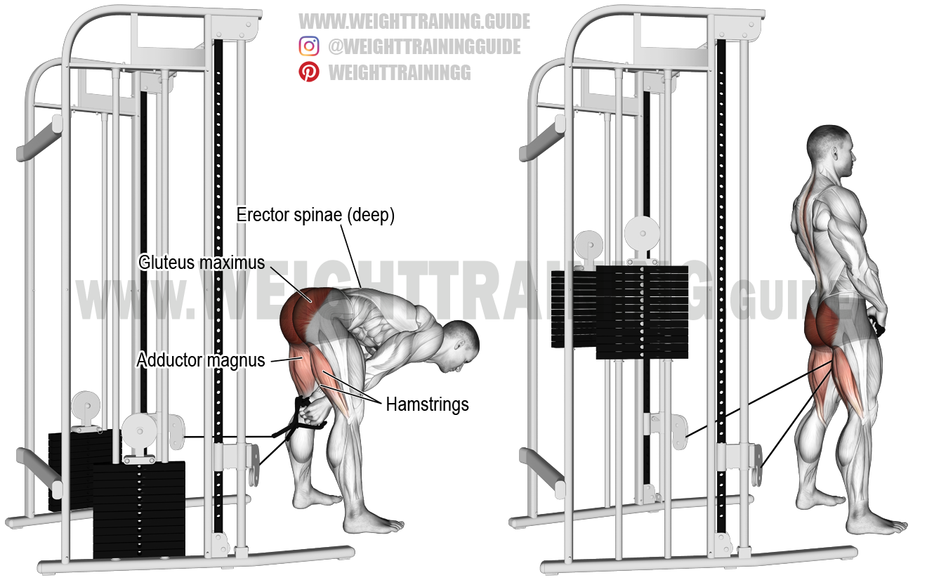 Chest Workout With Bench Head Supported Bent Over