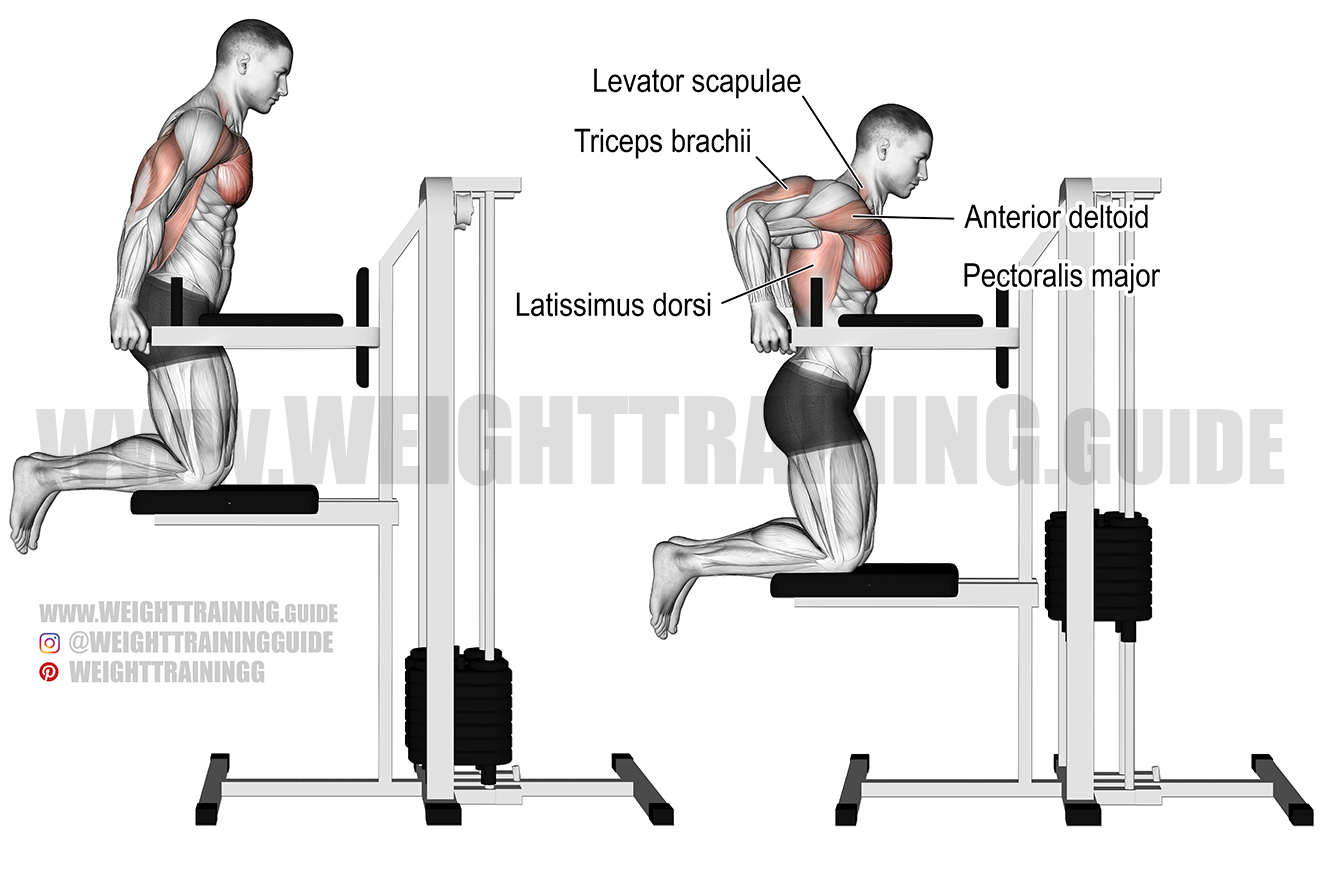Machine-assisted triceps dip exercise