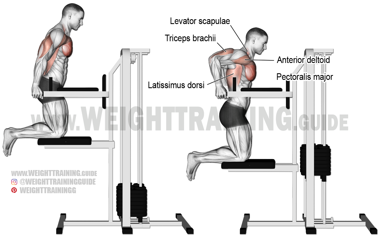 Machine Assisted Triceps Dip Exercise Instructions And Video