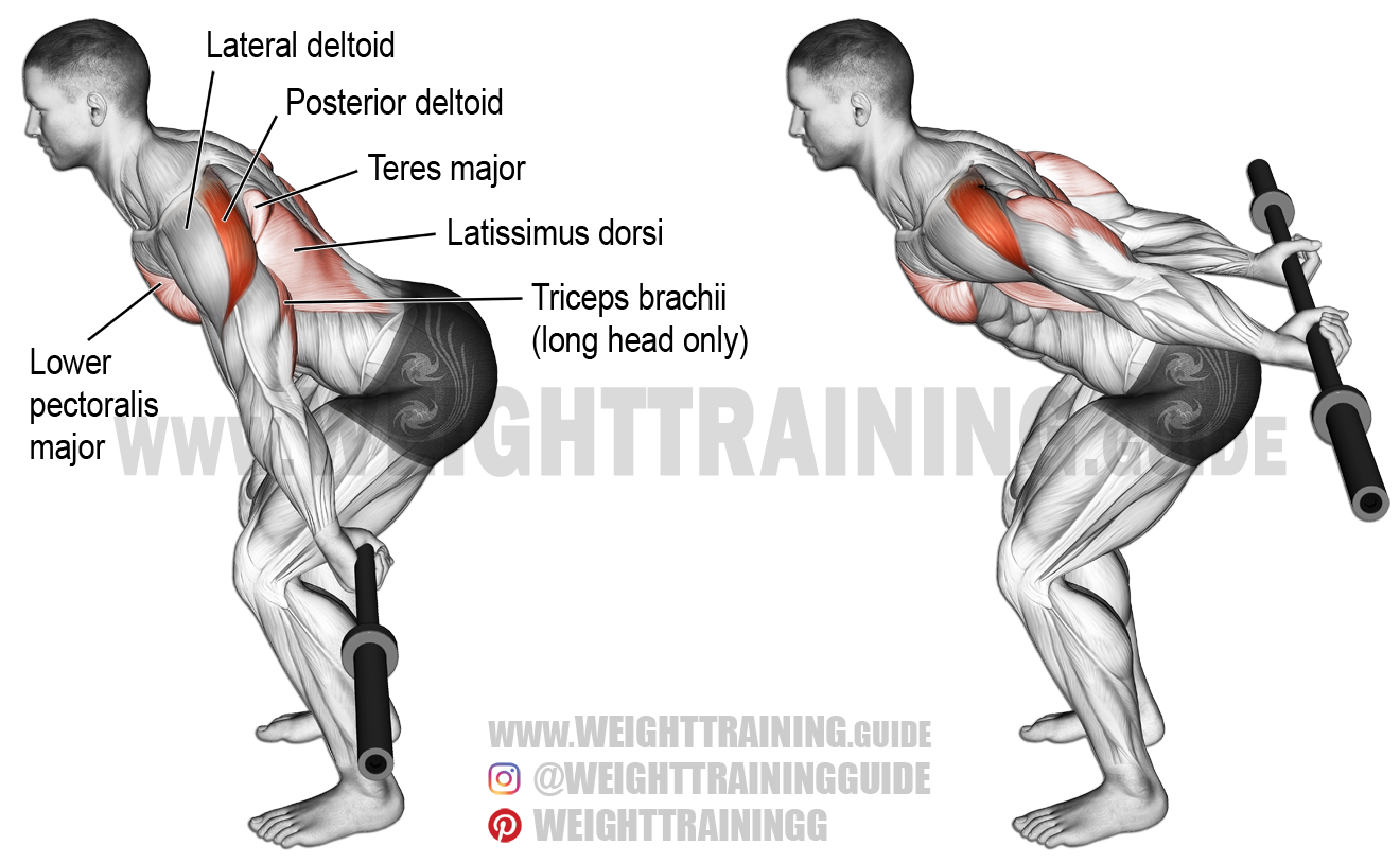Bent-over barbell reverse raise exercise instructions and video