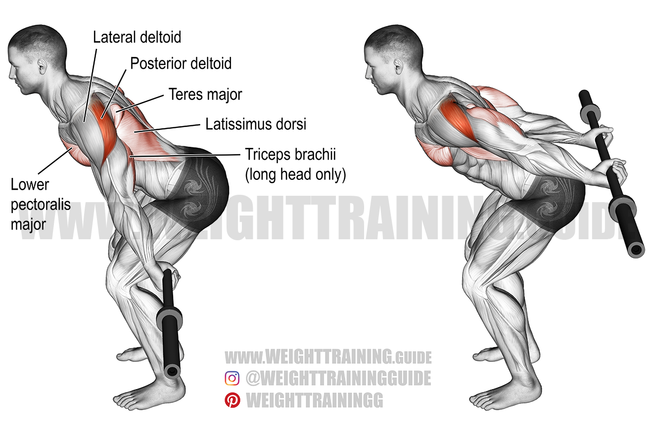 Bent-over barbell reverse raise exercise