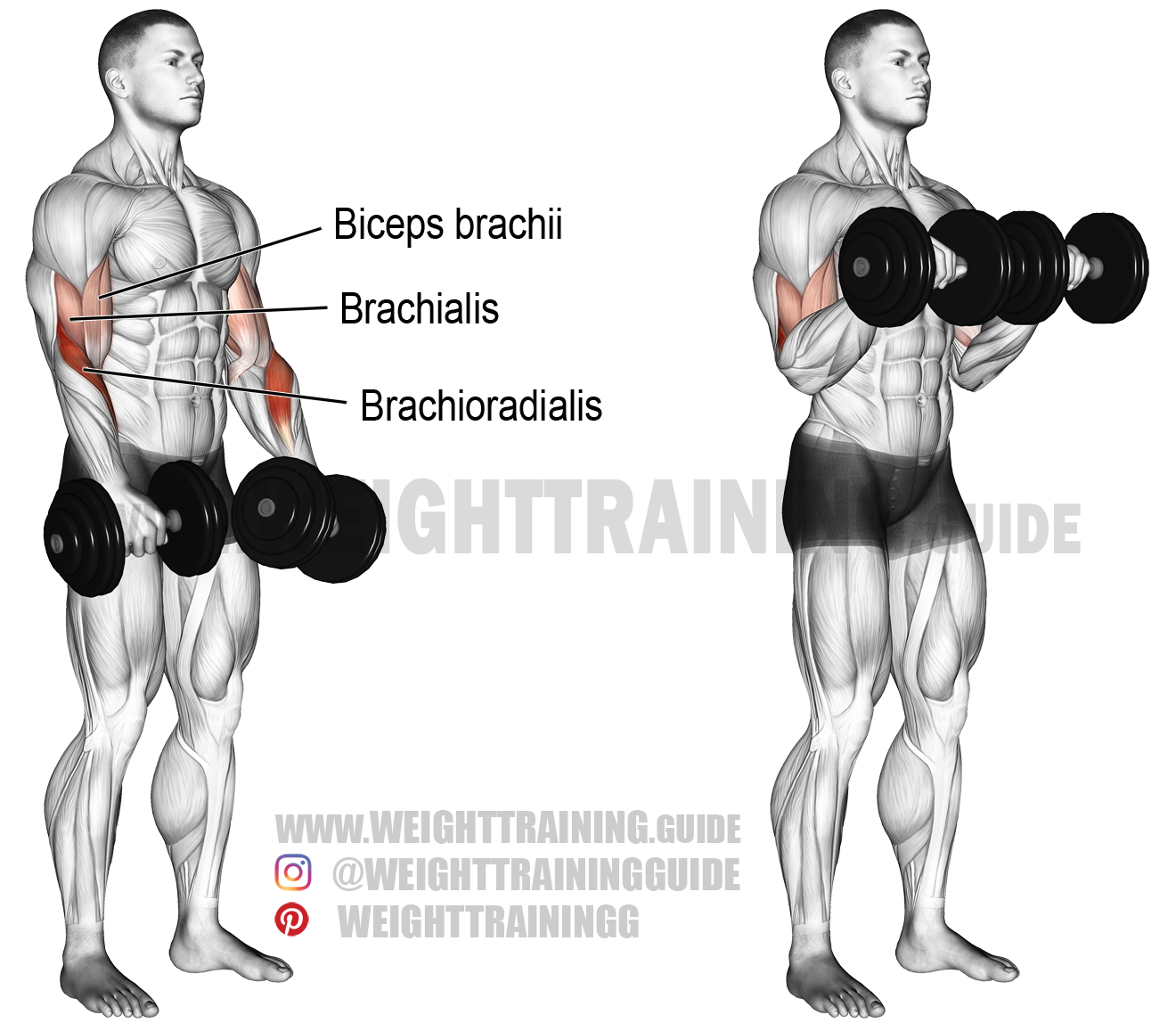 Watch Seated Upper Body Workout video