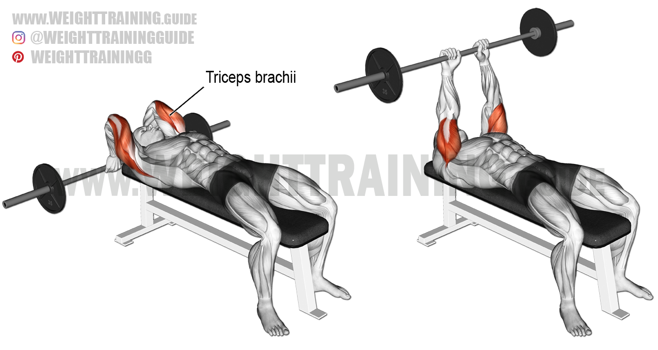 lying barbell triceps extension exercise instructions and