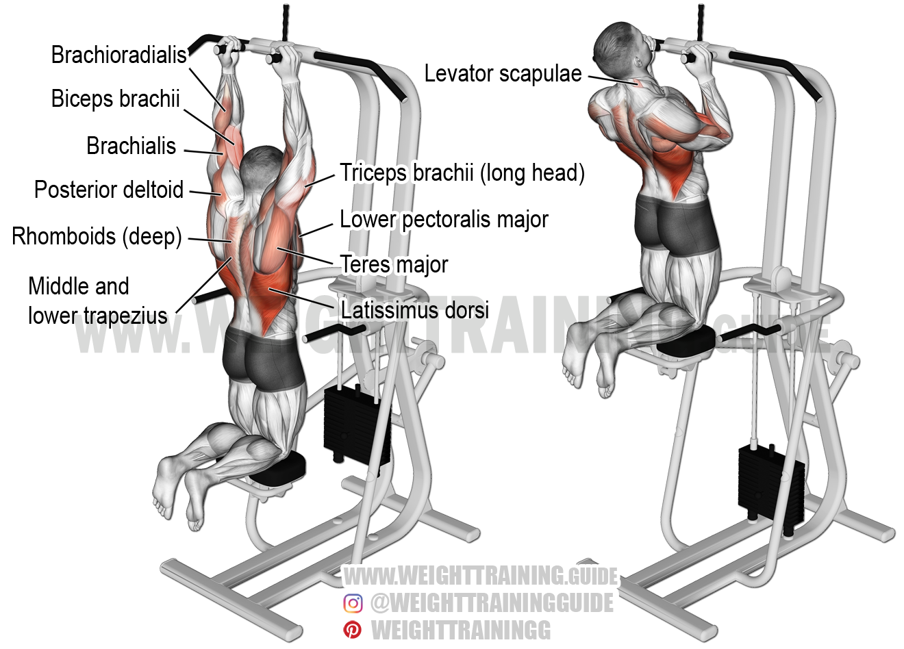 Machine-assisted close neutral-grip pull-up exercise ...