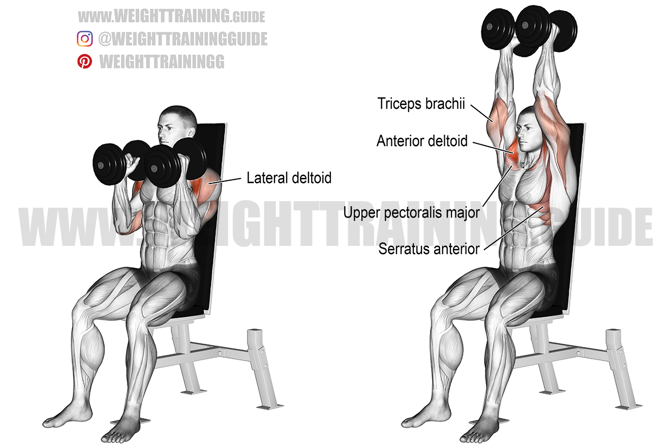 Seated neutral-grip dumbbell overhead press exercise