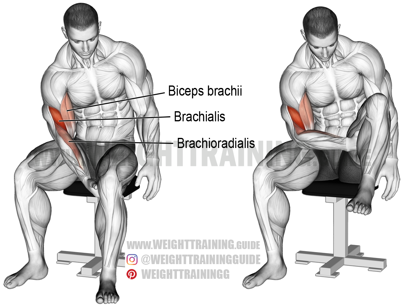 Biceps leg curl exercise instructions and video | Weight Training Guide