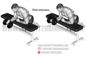 Dumbbell one-arm reverse wrist curl exercise