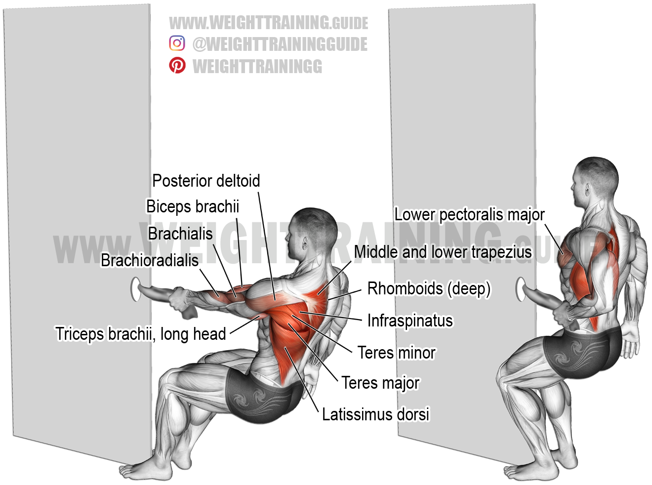 teres major Archives | Weight Training Guide