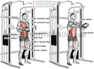 Cable horizontal Pallof press exercise