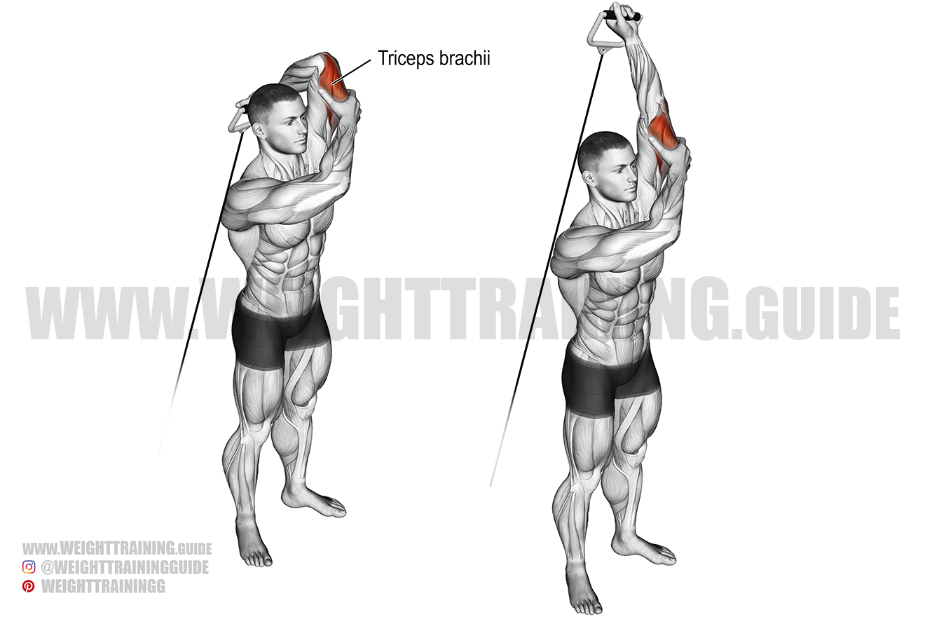 standing overhead one-arm cable triceps extension exercise
