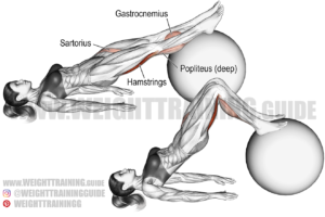 Stability ball leg curl exercise