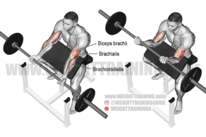 Barbell preacher curl exercise
