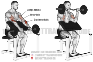 EZ bar reverse preacher curl exercise