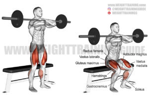 Barbell front box squat exercise
