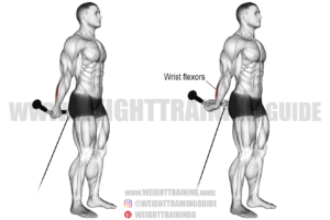 Behind-the-back cable wrist curl exercise