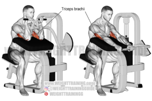 Machine triceps extension exercise