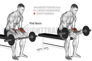 Seated barbell wrist curl exercise