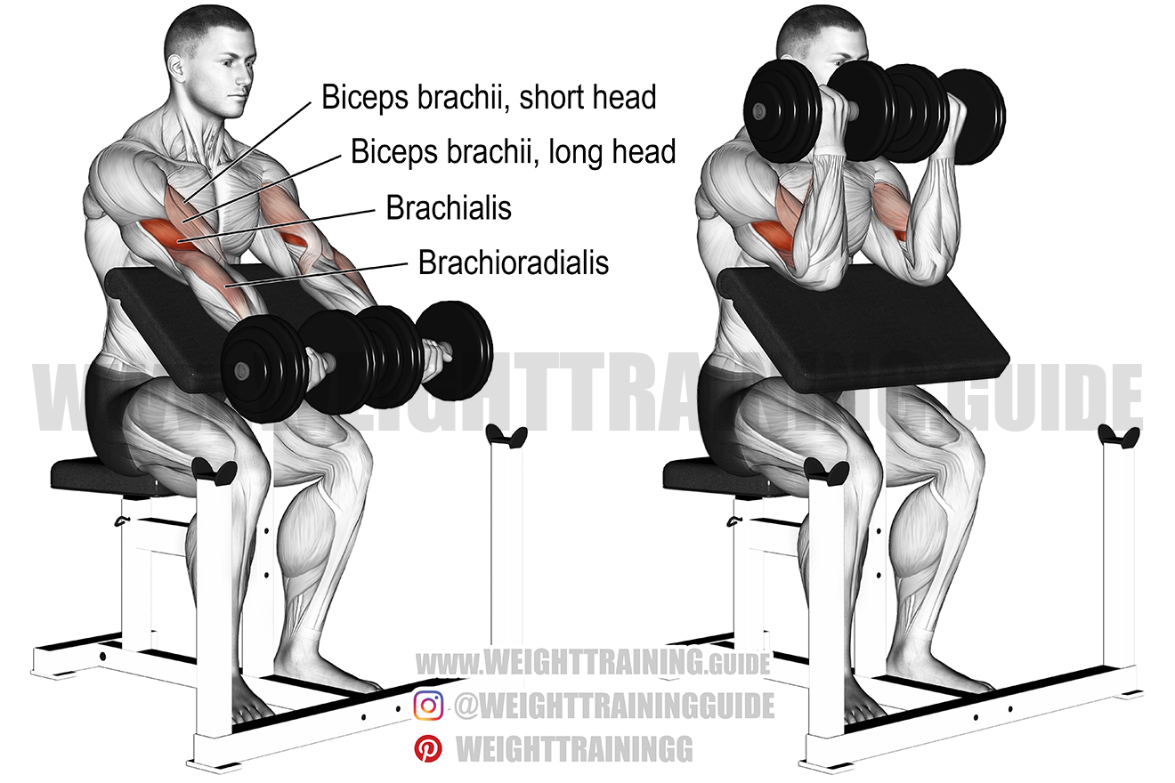 Dumbbell preacher curl (two arms) exercise