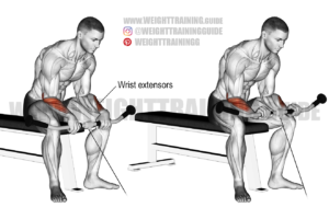Cable reverse wrist curl exercise