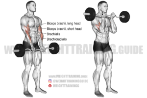 Close-grip EZ bar curl exercise