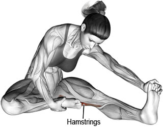 Seated hamstrings stretch
