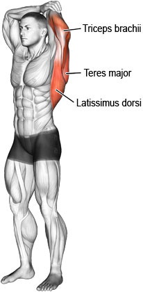 Overhead triceps stretch