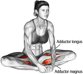 Seated adductor or groin stretch