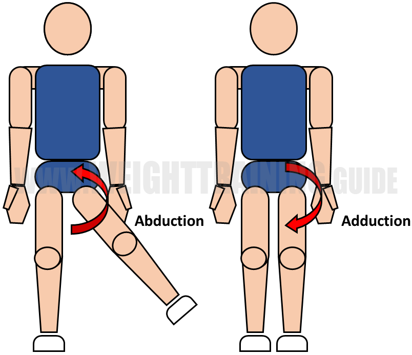 Abduction and adduction of hip