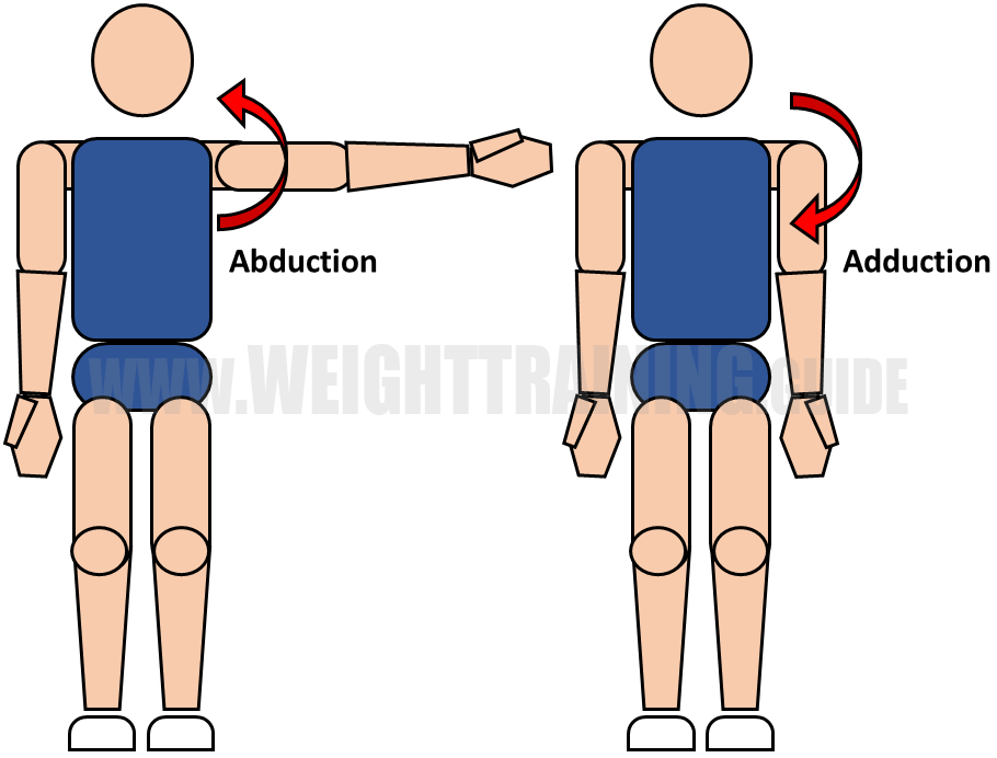Abduction and adduction of shoulder