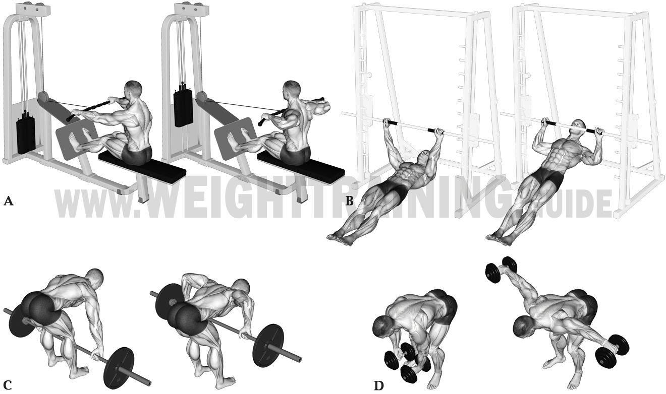 Horizontal pulling exercises, upper arms out to sides