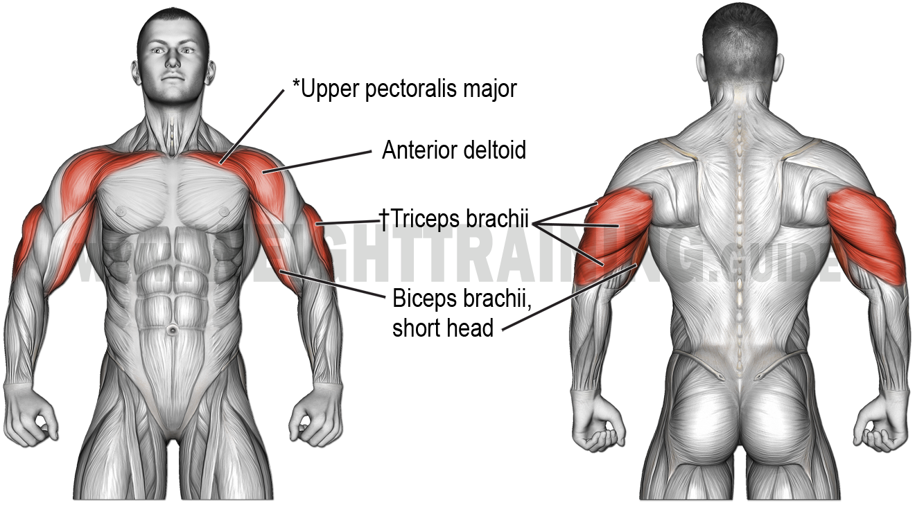 Muscles activated by horizontal pushing exercises, obtuse