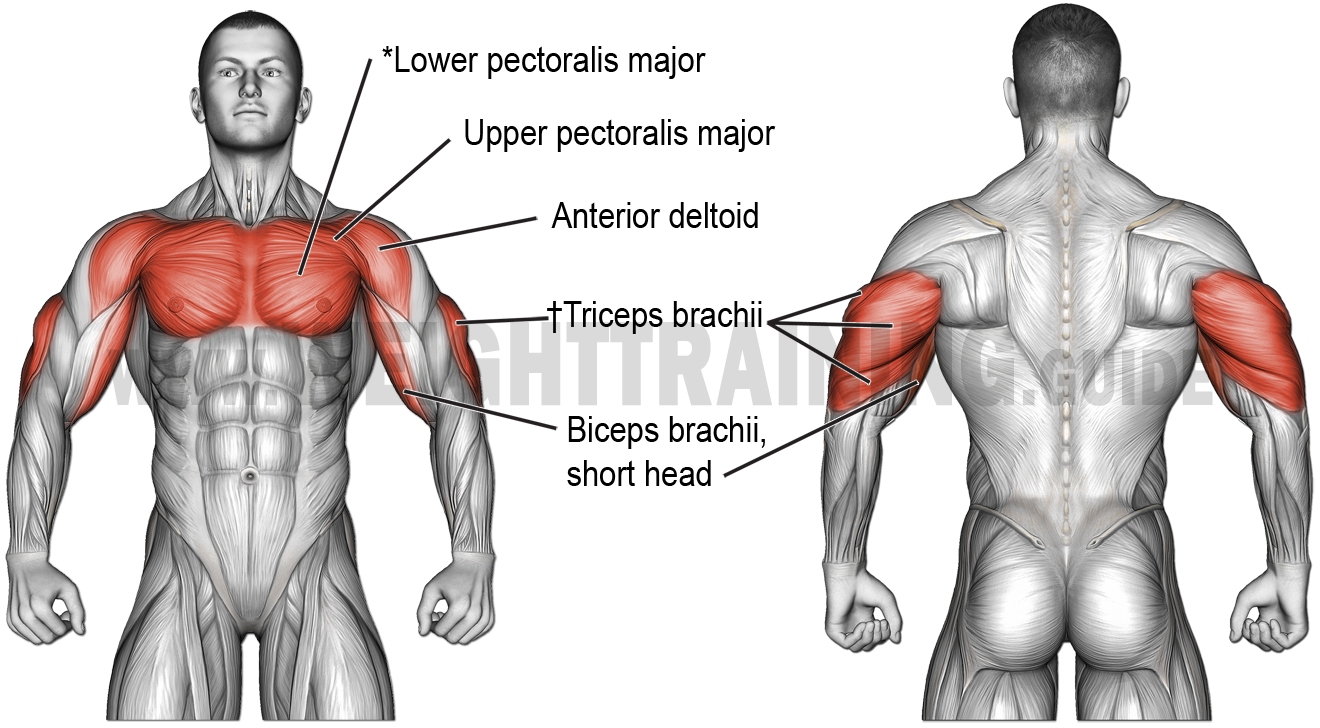 Muscles activated by horizontal pushing exercises, perpendicular or acute