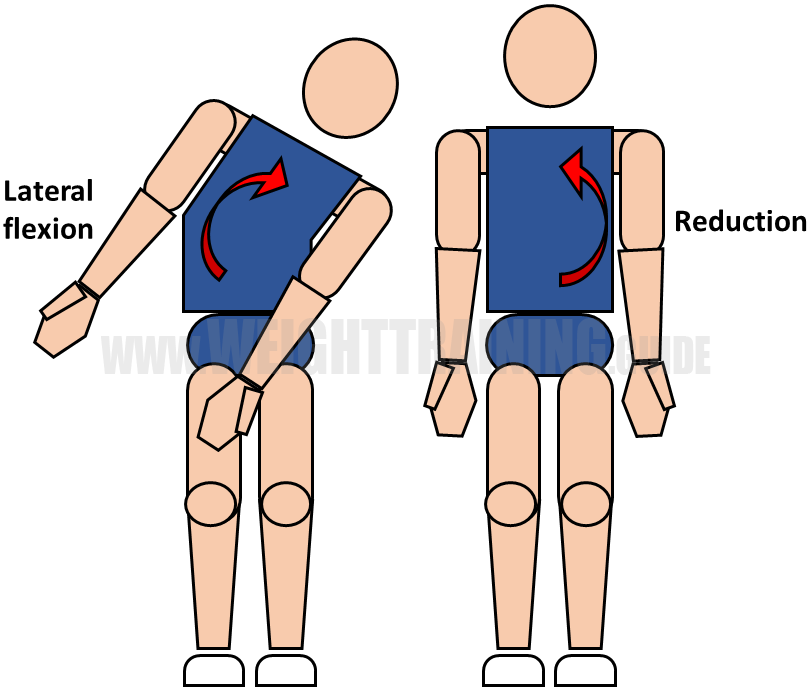 Lateral flexion and reduction of waist