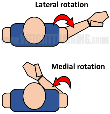 Lateral and medial rotation of shoulder