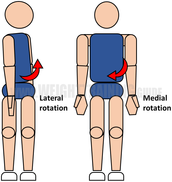 Lateral and medial rotation of waist
